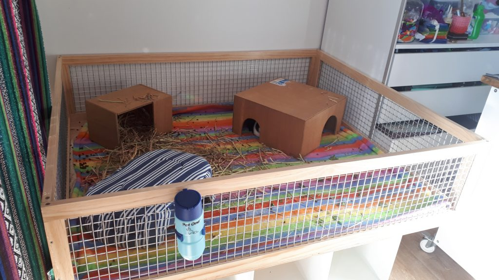 top view of guinea pig cage